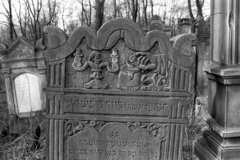 Cemetery clean up @ Jewish cemetery Lodz, Poland   Łódź   Łódzkie   Poland
